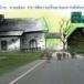 หมู่บ้าน เชียงเครือ